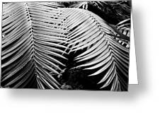 Fern Room Cycads Greeting Card