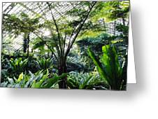 Fern Room Light Rays Greeting Card