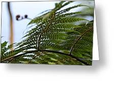 Fern Tree Frond Greeting Card