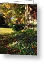 Fernhill Gardens, Co Dublin, Ireland Greeting Card