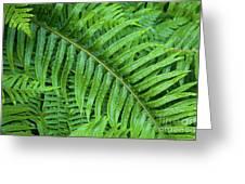 Ferns After A Spring Rain Greeting Card