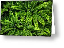 Ferns After The Rain Greeting Card