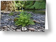 Ferns Along Banks Of Eagle Creek Greeting Card