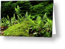 Ferns And Moss On The Ma At Greeting Card