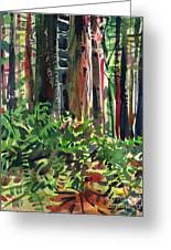 Ferns And Redwoods Greeting Card