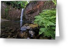 Ferns And Rocks By Abiqua Falls Greeting Card