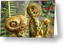 Ferns Art Print Forest Fern Artwork Canvas Baslee Troutman Greeting Card