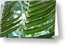 Ferns Art Prints Green Forest Fern Sunlit Giclee Baslee Troutman Greeting Card