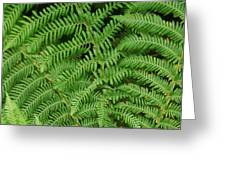 Ferns Au Naturale Greeting Card