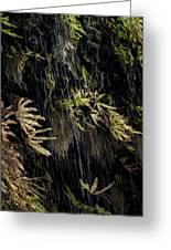 Ferns Below Falls By Jean Noren Greeting Card