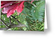 Ferns Come Alive Greeting Card