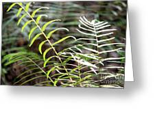 Ferns In Natural Light Greeting Card