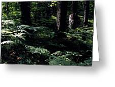 Ferns In The Forest Wc Greeting Card