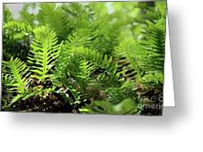 Ferns Of The Forest Floor Greeting Card