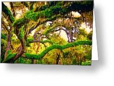Ferns On Florida Oaks Greeting Card