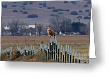 Ferruginous Hawk And Meadowlark Greeting Card
