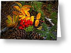 Festive Elements Greeting Card