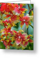Festive Orchids Greeting Card