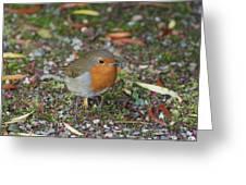 Festive Robin Greeting Card