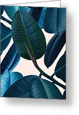 Ficus Elastica 2 Greeting Card