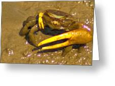 Fiddler Crab Pano Greeting Card