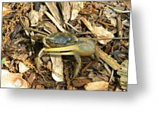 Fiddler On The Ground Greeting Card