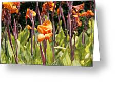Field For Iris Greeting Card