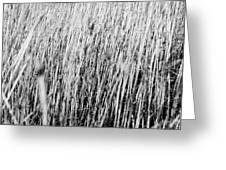 Field Grasses Greeting Card