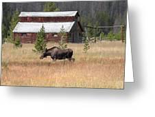 Field Moose Greeting Card