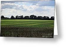 Field Near Coswig Greeting Card