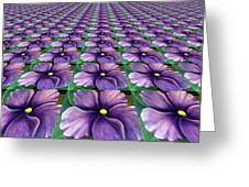 Field Of African Violets Greeting Card