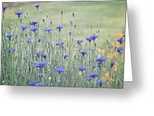 Field Of Bachelor Buttons Greeting Card