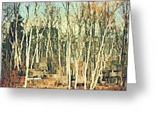 Field Of Birch Greeting Card