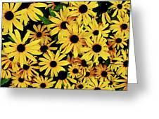 Field Of Black-eyed Susans Greeting Card