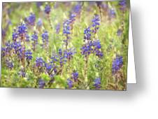 Field Of Blue Lupines  Greeting Card