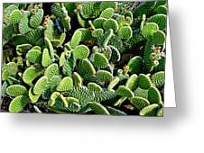 Field Of Cactus Paddles Greeting Card