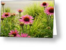 Field Of Coneflowers Greeting Card