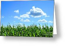 Field Of Corn In August Greeting Card