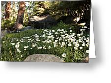 Field Of Daisies In Tahoe Greeting Card