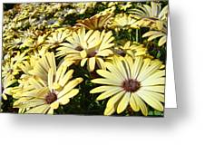 Field Of Daisies Landscape Floral Art Prints Daisy Baslee Troutman Greeting Card