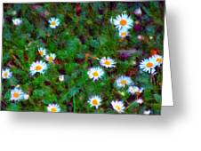 Field Of Daisys  Greeting Card