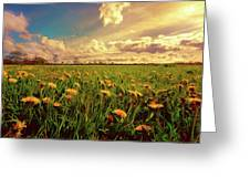 Field Of Dandelions At Sunset Greeting Card