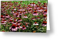 Field Of Echinacea Greeting Card
