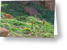Field Of Echium Wildpretii In The Teide National Park Greeting Card