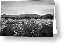 Field Of Flowers In Black And White Greeting Card