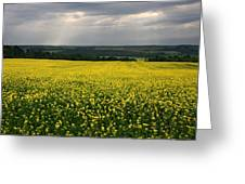 Field Of Gold Sherbrooke Quebec Canada Greeting Card