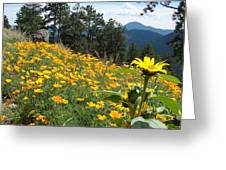 Field Of Golden  Poppies Greeting Card