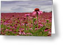 Field Of Health Greeting Card