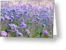 Field Of Lavendar Greeting Card
