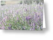 Field Of Lavender Flowers Greeting Card by Beverly Cazzell